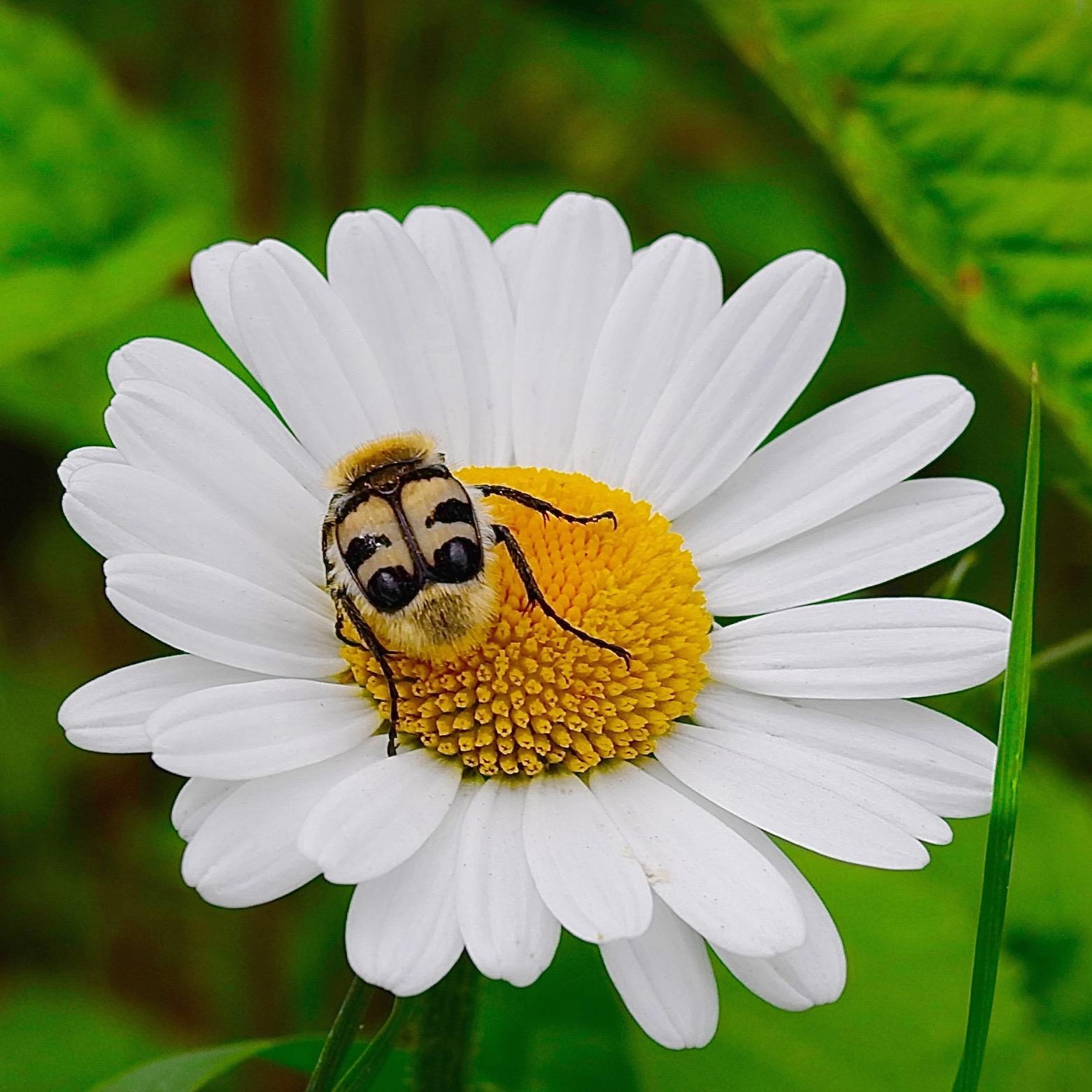 2015_05_29-Blume-mit-Kaefer_gross.jpg