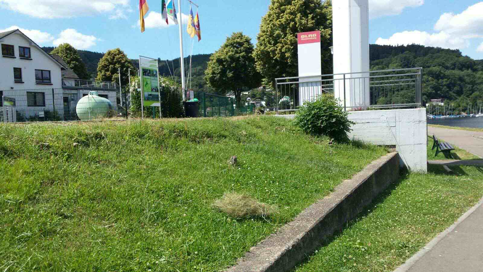 2016_07_18 Grasbueschel an Land